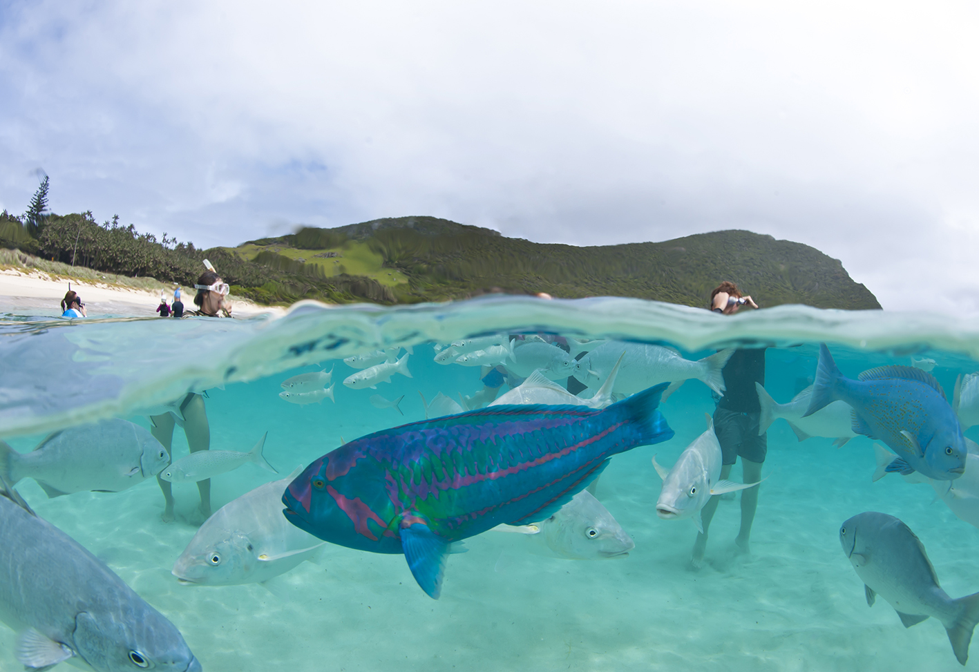 Capella Lodge Lord Howe Isand Marine Encounters