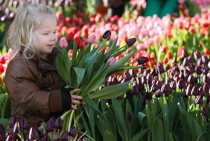 Girl With Tulips High Cmyk 7412